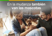 mudanza con nuestras mascotas