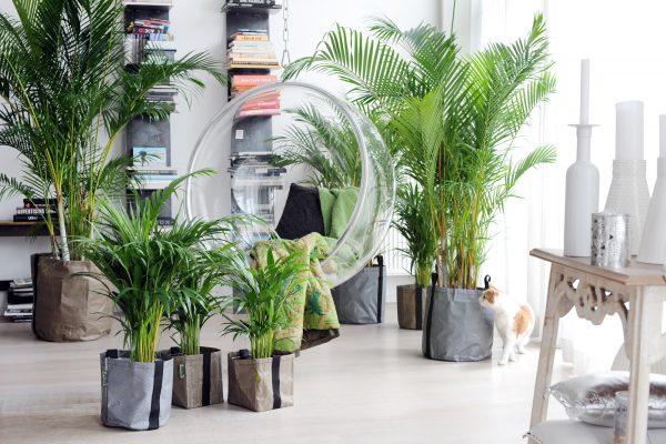 plantas-hogar